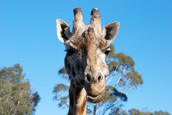 CHCの動物園「Orana Wildlife Park」に行ってきた