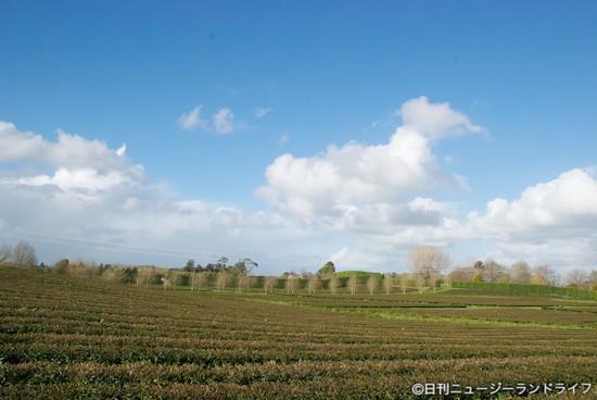 NZ初の手摘み茶メーカーZealongを訪ねる