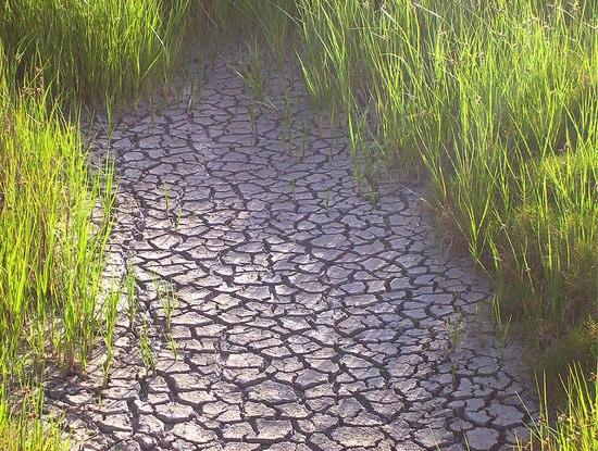 歴史的な雨不足で干ばつ宣言 ニュージーランド