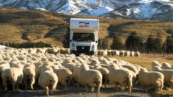 [動画] 道に1000頭以上の羊 おかげで大渋滞