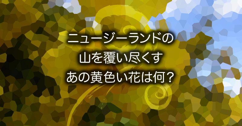 山を覆い尽くす黄色い花の正体は?