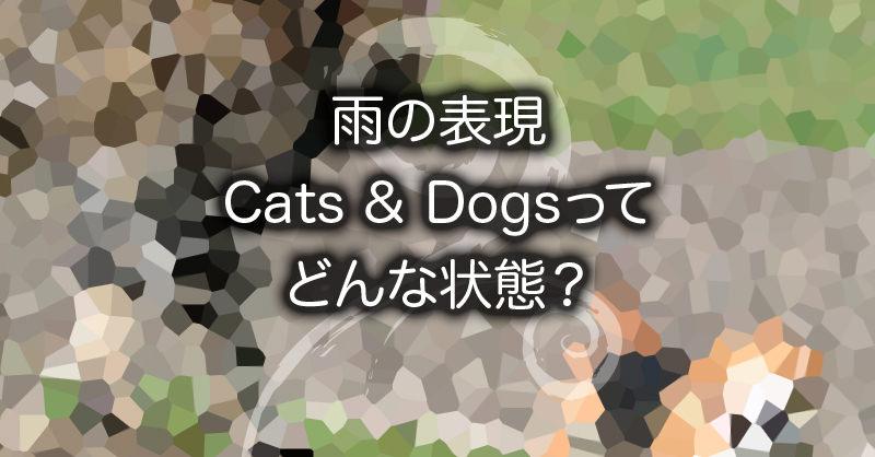 雨の表現Cats & Dogsってどんな状態?