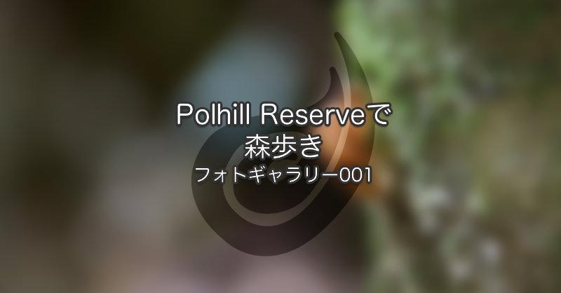 Polhill Reserveで森歩き|フォトギャラリー 001
