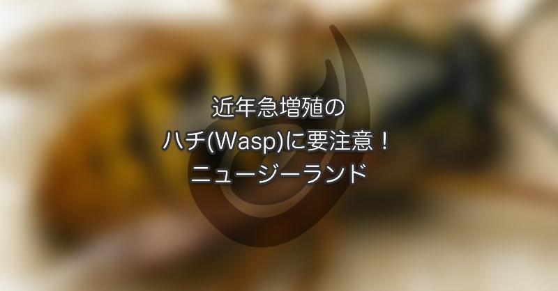 近年急増殖のハチ (Wasp)に要注意!ニュージーランド