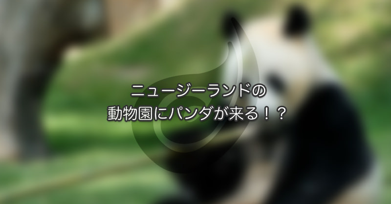 ニュージーランドの動物園にパンダが来る!?