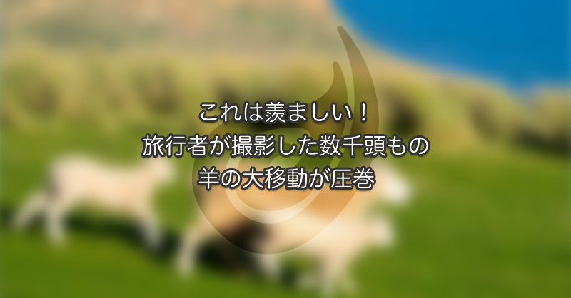 これは羨ましい!旅行者が撮影した数千頭もの羊の大移動が圧巻