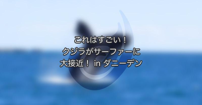 これはすごい!クジラがサーファーに大接近!in ダニーデン