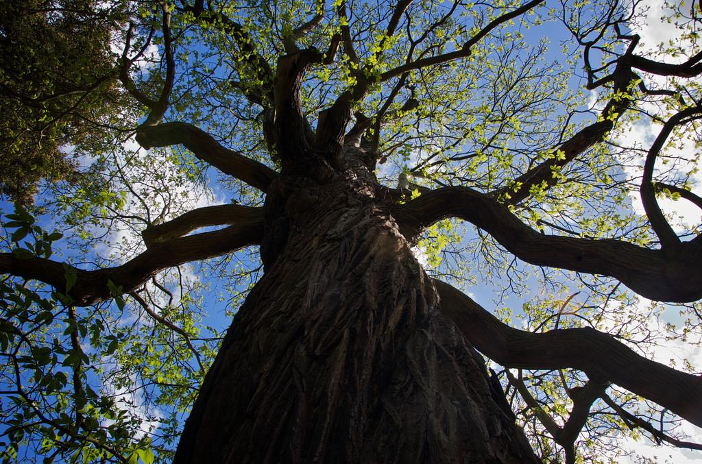 ニュージーランドの国立公園に「人と同じ権利」が与えられる